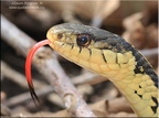 Reptiles - Batraciens